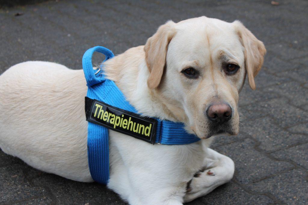 Therapiehunde sorgen für eine besondere Stimmung und führen zu neuen Reizen bei Jung & Alt